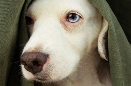 Mi perro tiene miedo a los truenos |  ¿Qué hago?
